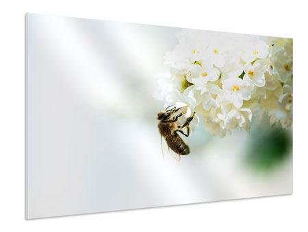 Hartschaumbild Die Hummel und die Blüte