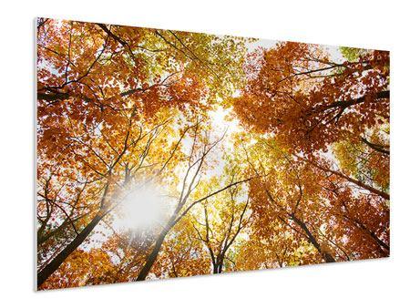 Hartschaumbild Herbstbäume