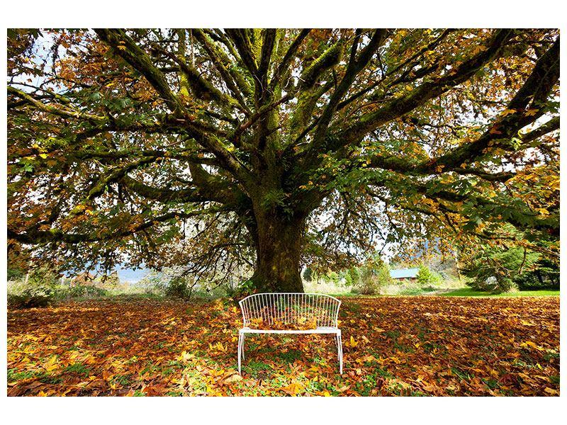 Hartschaumbild Mein Lieblingsbaum