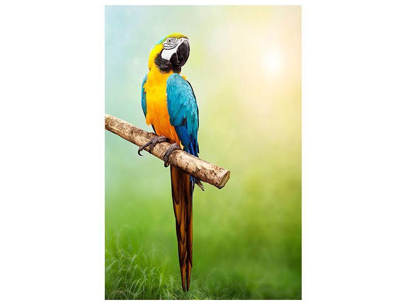 Hartschaumbild Der Papagei