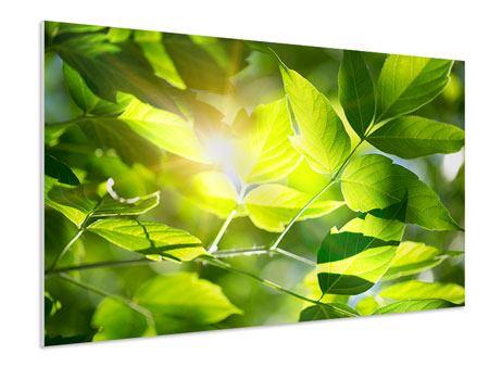 Hartschaumbild Es grünt so grün