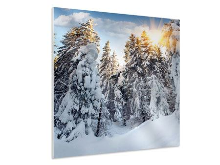 Hartschaumbild Tannen im Schnee