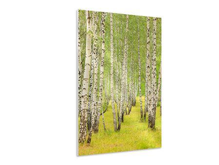 Hartschaumbild Der Birkenwald im Spätsommer