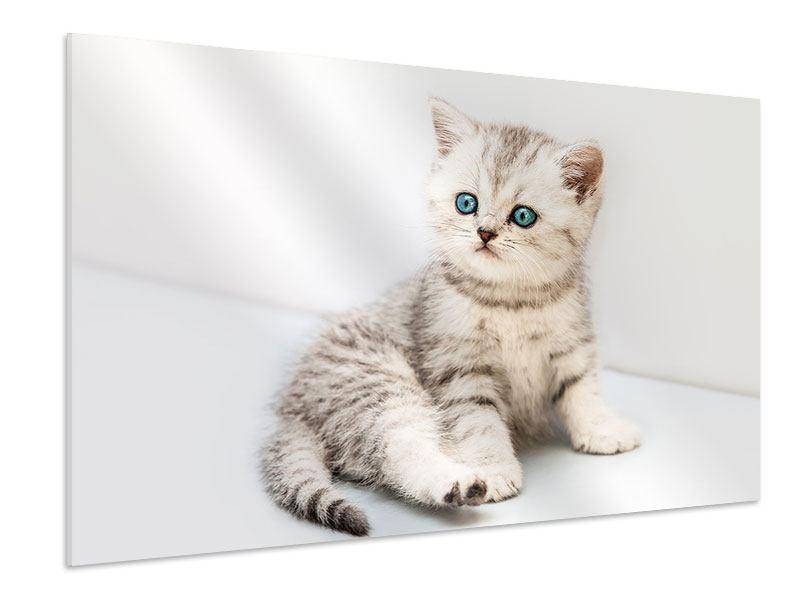 Hartschaumbild Katzenbaby