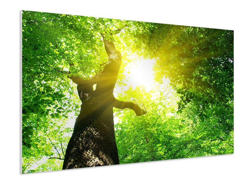 Hartschaumbild Baum