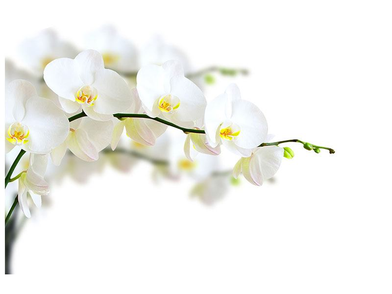 Hartschaumbild Weisse Orchideen