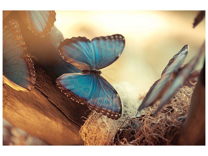 Hartschaumbild Schmetterlinge