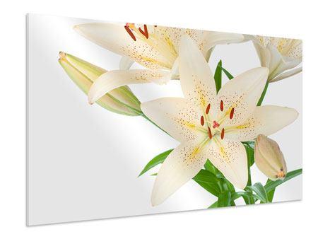 Hartschaumbild Weisser Lilienstrauch