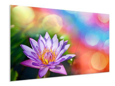 Hartschaumbild Colored Lotus