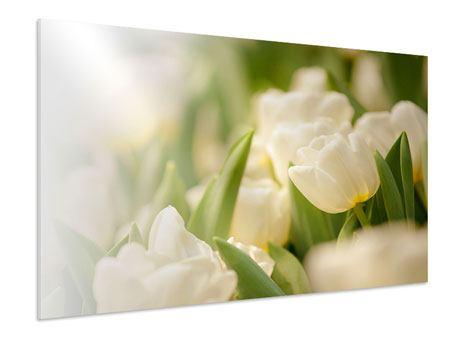Hartschaumbild Tulpenperspektive
