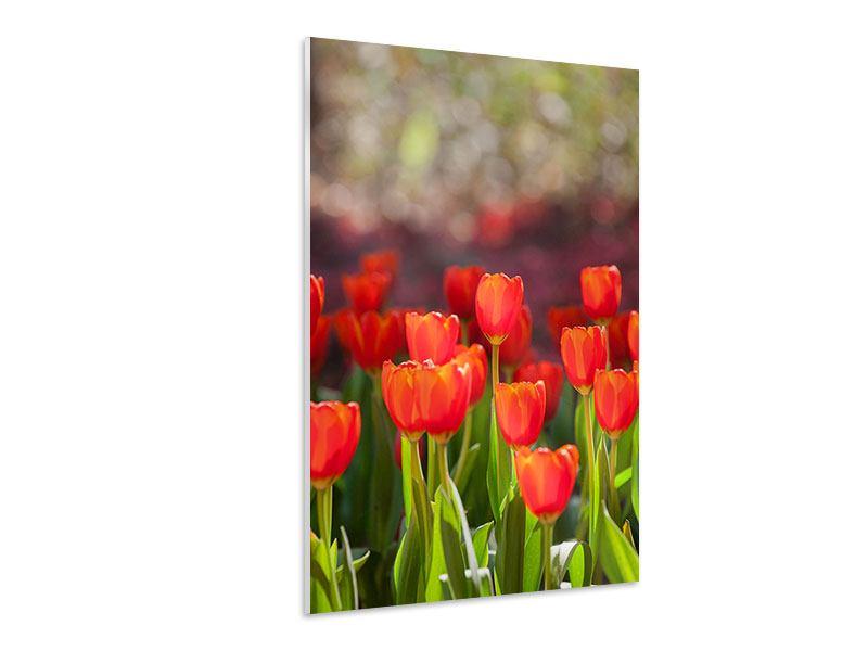 Hartschaumbild Das rote Tulpenbeet