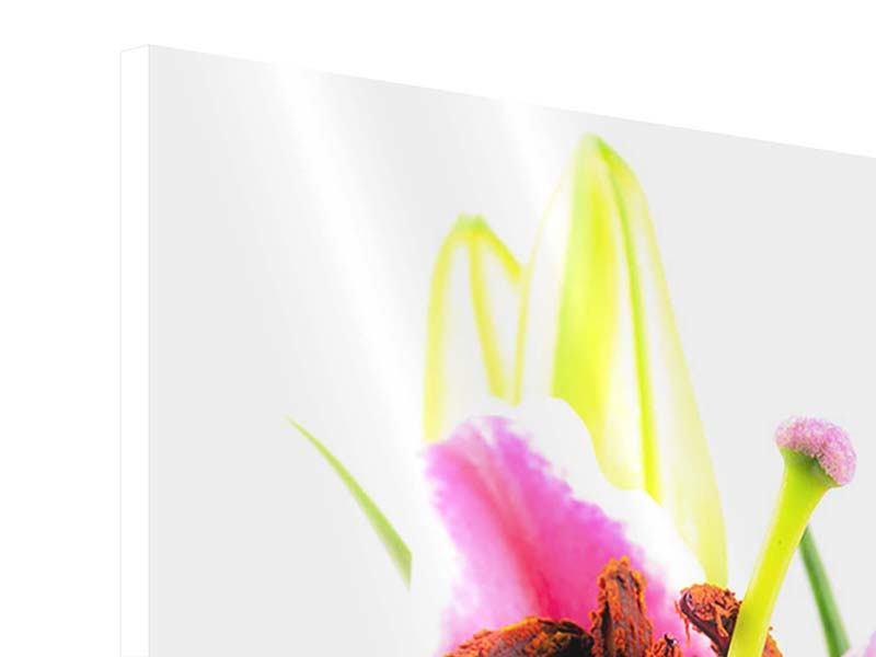 Hartschaumbild Makro-Lilie