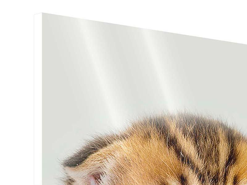 Hartschaumbild Faltohrkatzenbaby