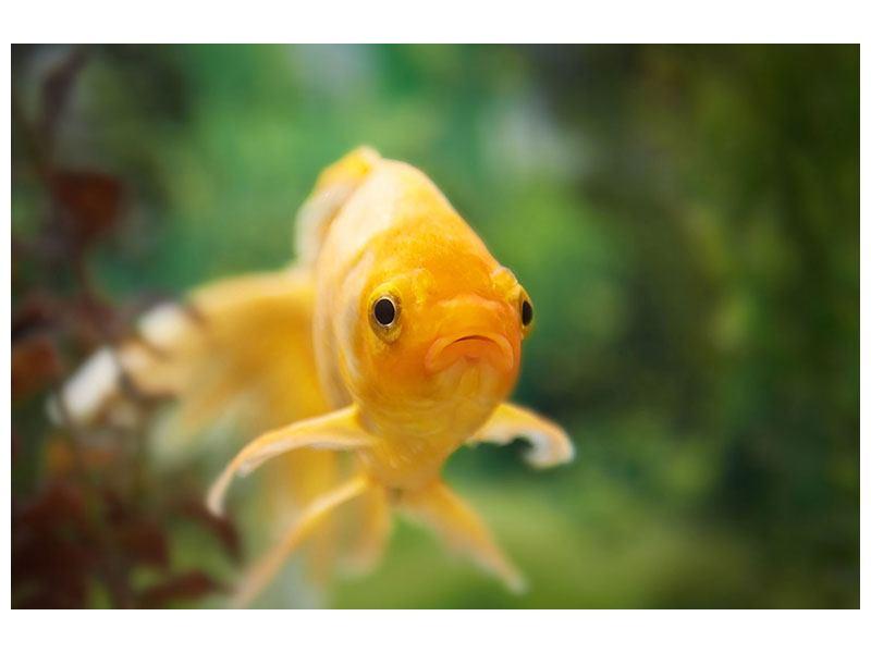 Hartschaumbild Der Fisch