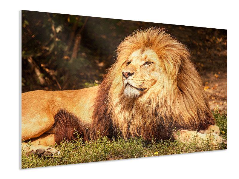 Hartschaumbild Löwe
