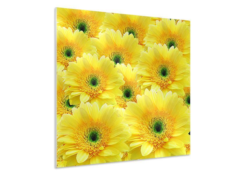 Hartschaumbild Flower Power Blumen