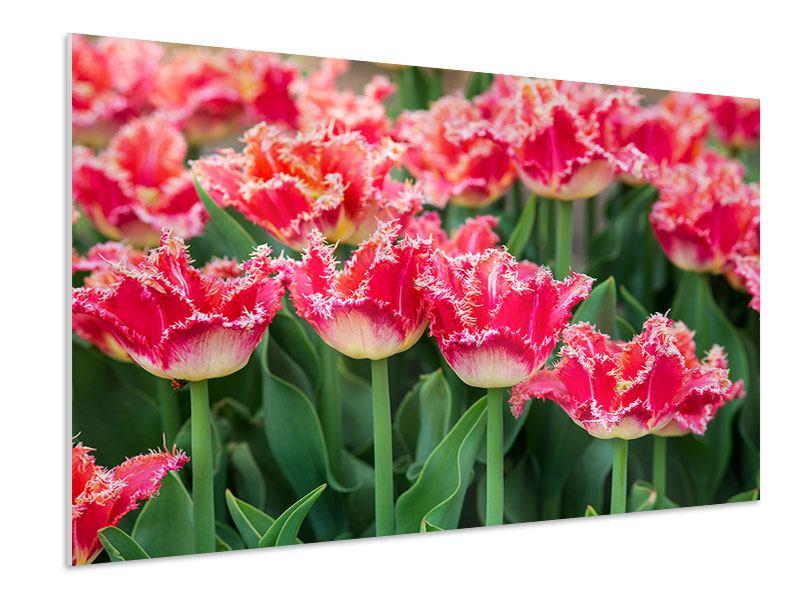 Hartschaumbild Die Tulpenwiese