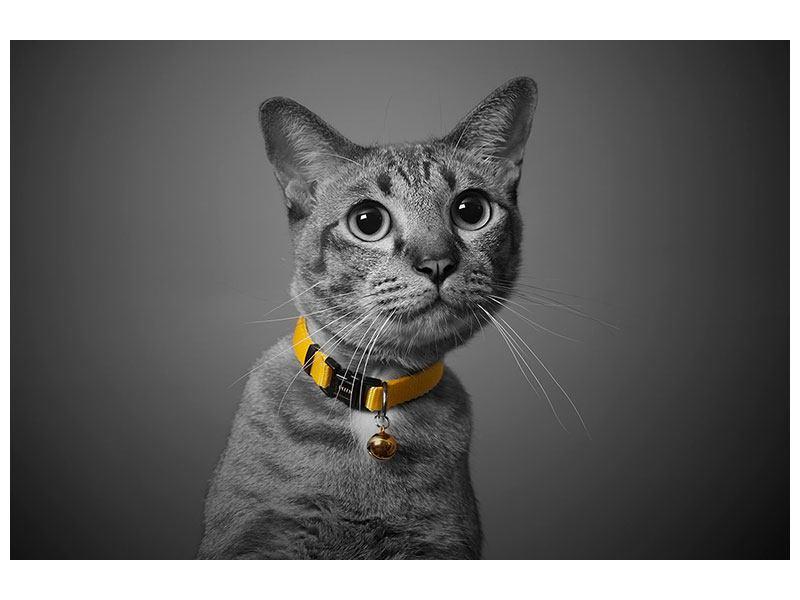 Hartschaumbild Katzenlady