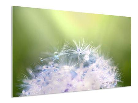 Hartschaumbild Pusteblume XL im Morgentau