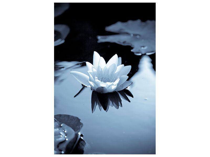 Hartschaumbild Schwarzweissfotografie der Seerose