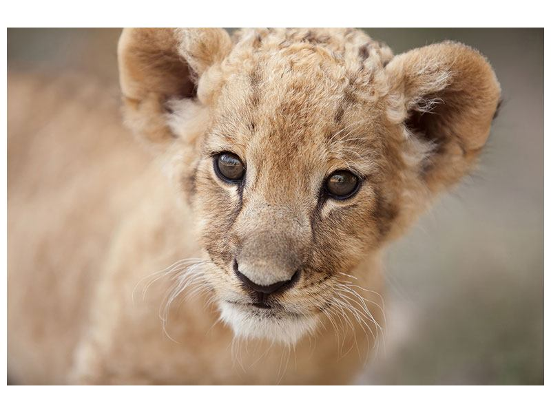 Hartschaumbild Löwenbaby