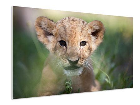 Hartschaumbild Das Löwenbabay