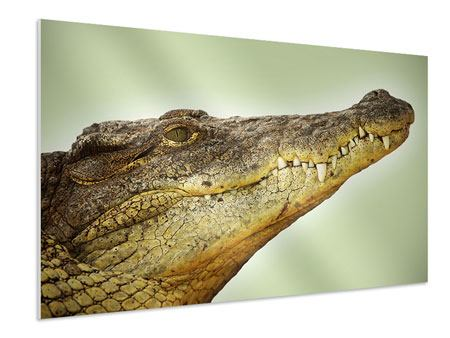 Hartschaumbild Close Up Alligator