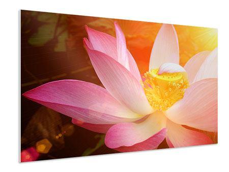 Hartschaumbild Close Up Lotus