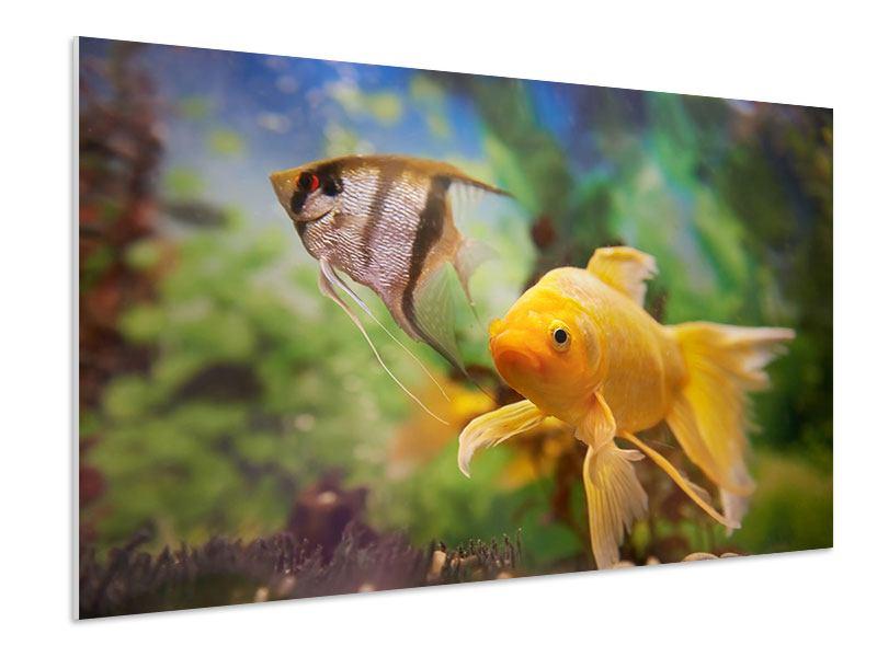 Hartschaumbild Bunte Fische