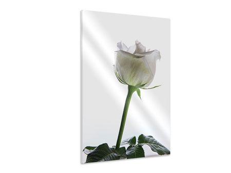 Hartschaumbild Im Namen der Rose