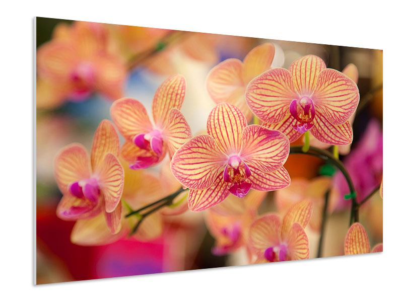 Hartschaumbild Exotische Orchideen