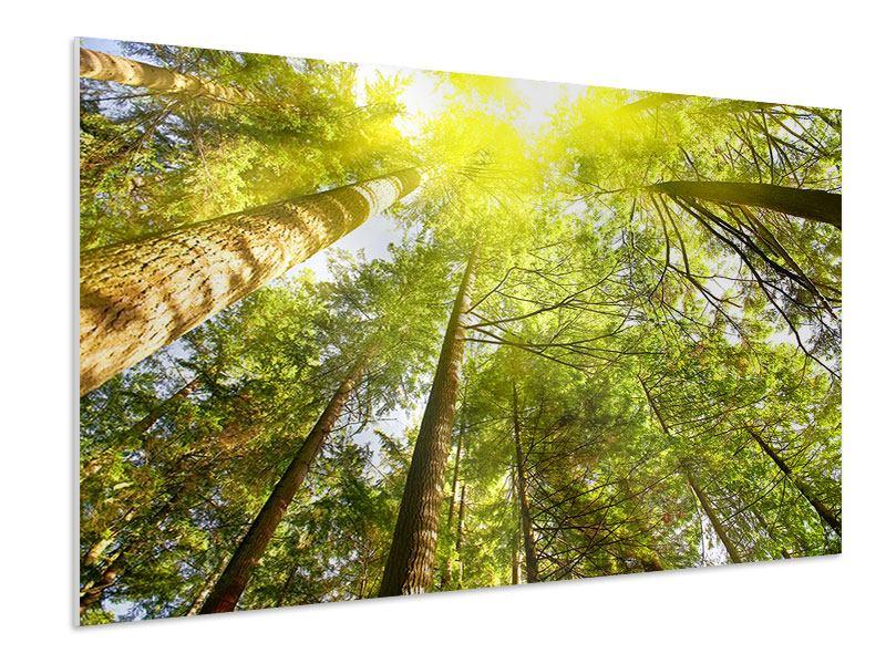 Hartschaumbild Baumkronen in der Sonne