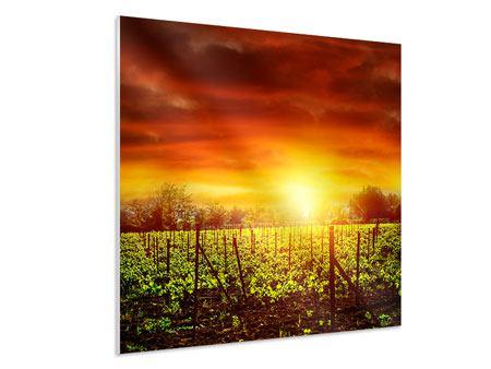 Hartschaumbild Der Weinberg bei Sonnenuntergang