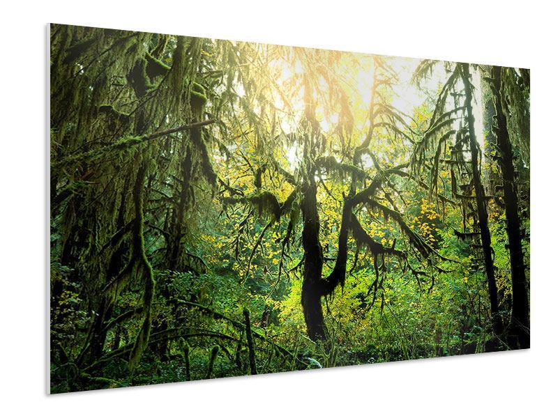 Hartschaumbild Verträumter Wald