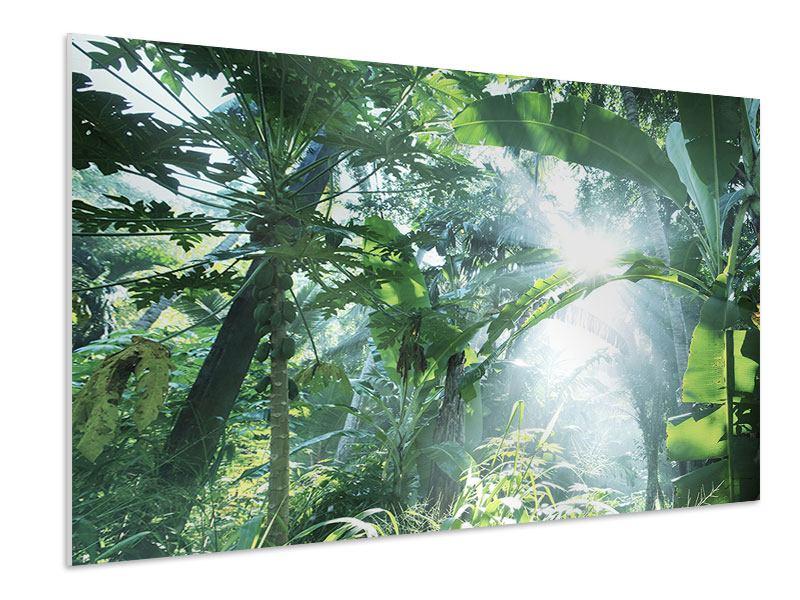 Hartschaumbild Dschungelstar