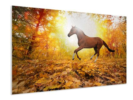 Hartschaumbild Vollblut im Herbstwald