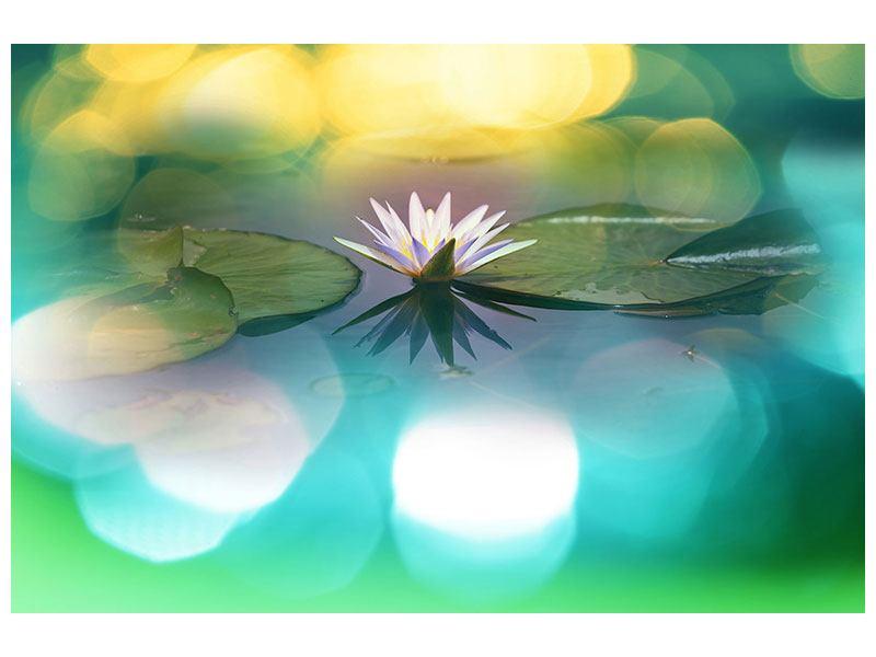 Hartschaumbild Lotus-Spiegelung