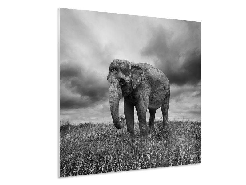 Hartschaumbild Elefant