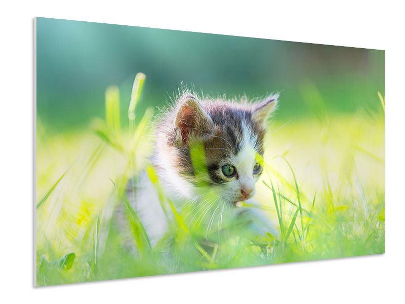 Hartschaumbild Kitten