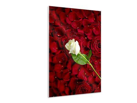 Hartschaumbild Auf Rosen gebettet