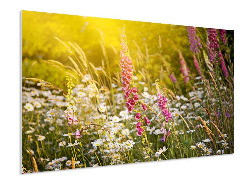 Hartschaumbild Sommerliche Blumenwiese