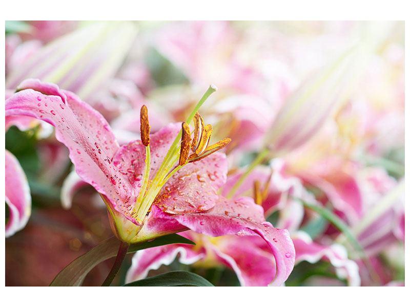 Hartschaumbild Lilien im Tau