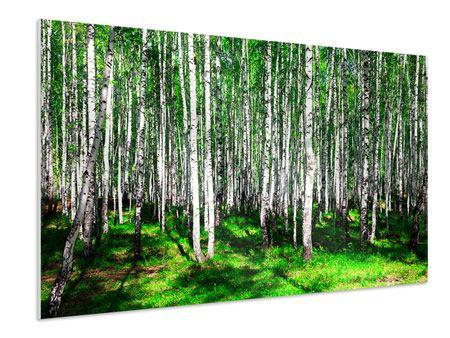 Hartschaumbild Sommerlicher Birkenwald