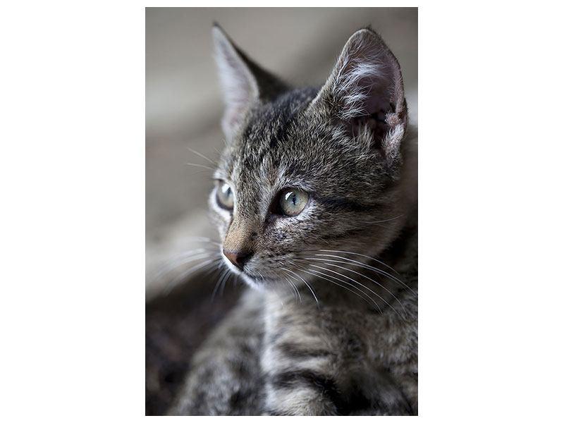 Hartschaumbild Tigerkatze