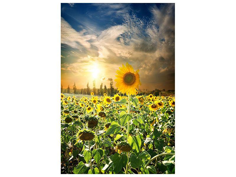 Hartschaumbild Sonnenblumen im Sonnenuntergang