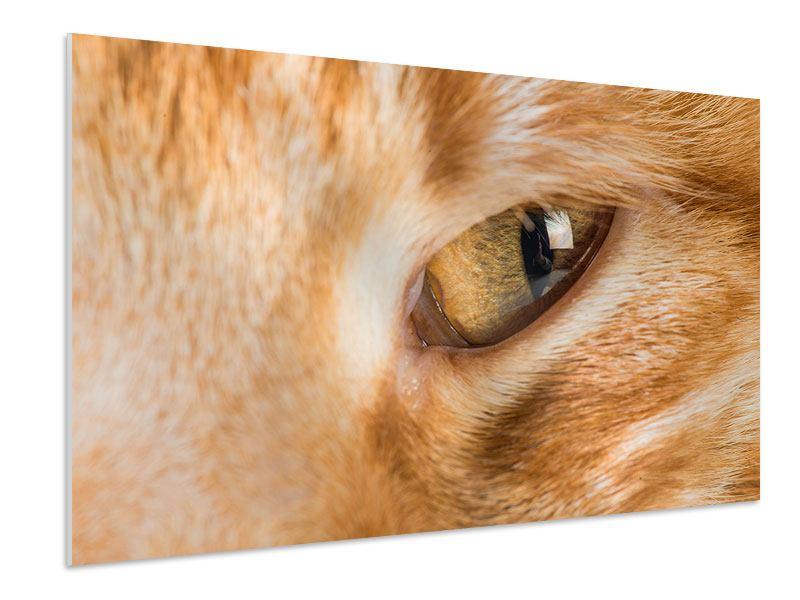 Hartschaumbild Close Up Katze