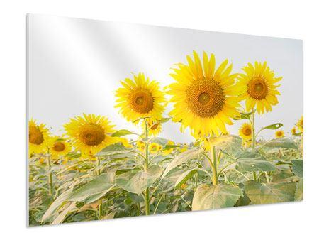 Hartschaumbild Das Sonnenblumenfeld