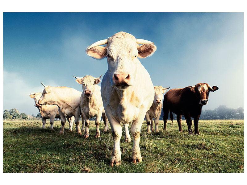 Hartschaumbild Kühe