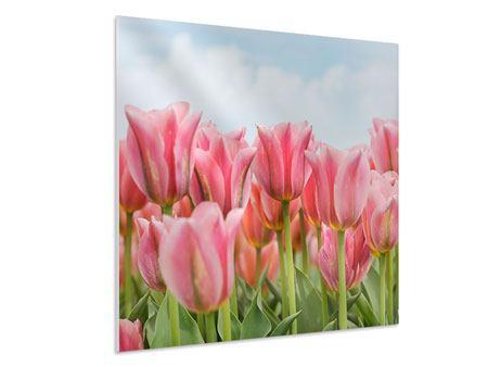 Hartschaumbild Zarte Tulpen