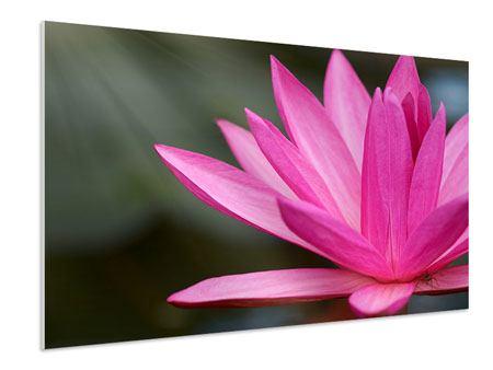 Hartschaumbild XXL Seerose in Pink